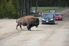 2019, Kanada/USA, 10.Tag, Yellowstone Nationalpark