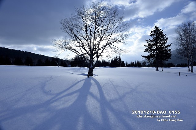 Photo:20191218-DAO_0155 日本,北海道的冬天,滑雪場,森林 By 盈盈設計影像網 0932046950