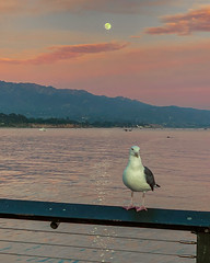 Bird & Moonrise