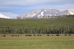 2019, Kanada/USA, 11.Tag, Yellowstone NP-Garrison