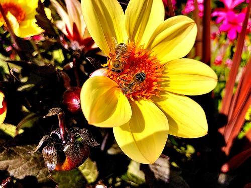 Flower & Hony