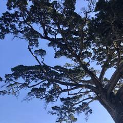 Around Monterey