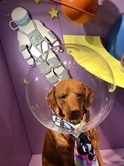 Space Dog, Color Version
