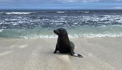 Mosquera Islet, the Galápagos Islands, Ecuador.