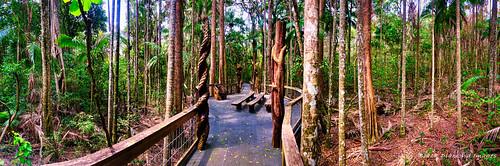 Bryce's Classroom - Sea Acres National Park, Boardwalk, Shelley Beach, Port Macquarie, NSW