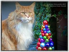 Wunderschöne Weihnachten - Merry Christmas - JOYEUX NOËL - Feliz Navidad 2019