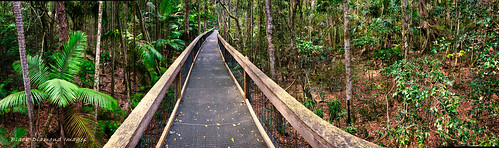 Sea Acres National Park, Boardwalk, Shelley Beach, Port Macquarie, NSW