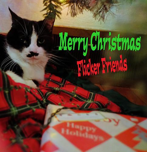 Meowy Christmas, Everyone!