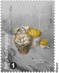 17z champignons timb A©