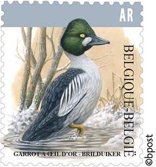 Oiseau AR-Brilduiker timbre 200%