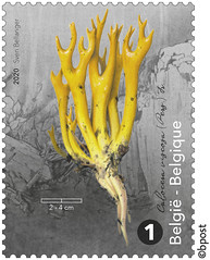 17z champignons timb E©