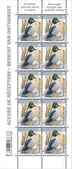 07bis Oiseau AR-Brilduiker