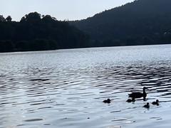 Lac d'Aydat, France