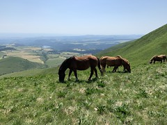 Horses in Le Mont-Dore, France