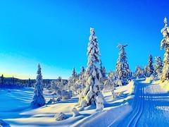 Winter! Finally! Tuddal. Norway