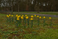 Gele bloemen (136FJAKA_3202)