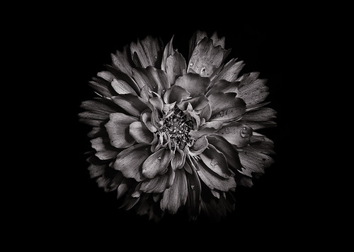 Backyard Flowers In Black And White 79