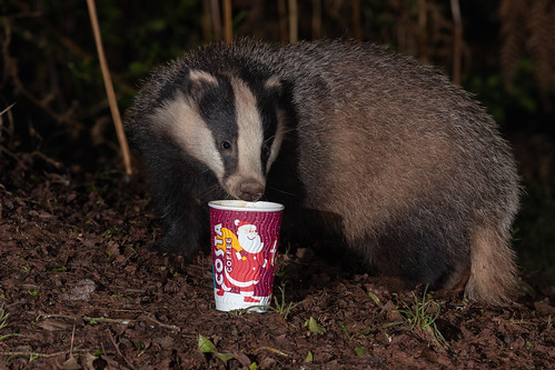 Explored 28-12-19 #19 I think Badgers enjoy a brew too, keeping them warm in the cold winter months.