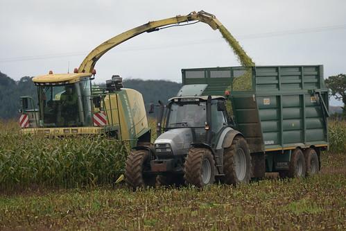 Krone Big X 630 filling a Smyth Trailer Field Master Super Cube Trailer drawn by a Lamborghini R6.165.7 Tractor