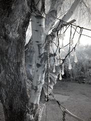 Lights and Palo Verde Tree (0344)