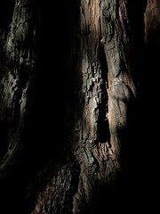 Study of a Tree Trunk, Forest of Nisene Marks