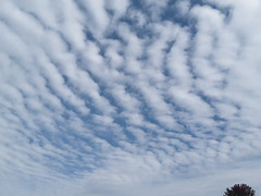 Altocumulus Clouds