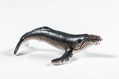 Humpback whale toy on white background