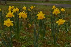 Gele bloemen (136FJAKA_3204)