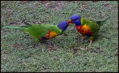 Rainbows sharing breakfast-1=
