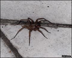 Spider 20191226_101054