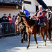 26. 12. 2019 Blagoslovitev konj KK Komenda