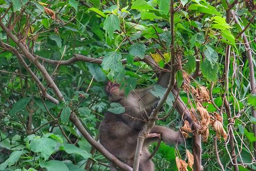 Un singe dans la péninsule d'Izu