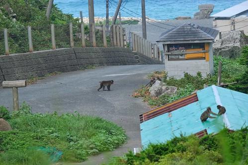 Un singe sur la route dans la péninsule d'Izu