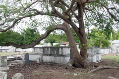 tombs and tree