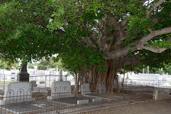tree and graves