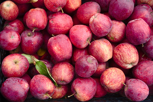 Apples, Mayfarm Flowers