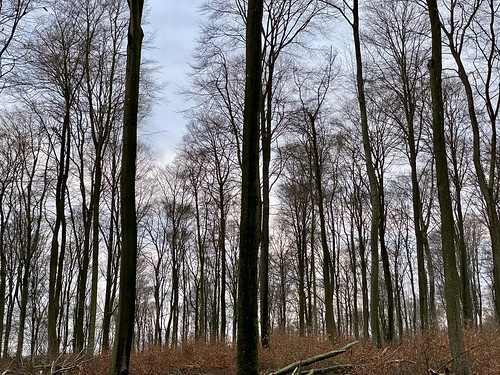 Stadtwald Neunkirchen