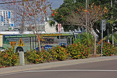 BUS on Alternate 19, approaching Court Street, Clearwater, Florida (2 of 3)