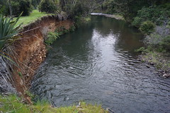 Waipoua Nature Forest