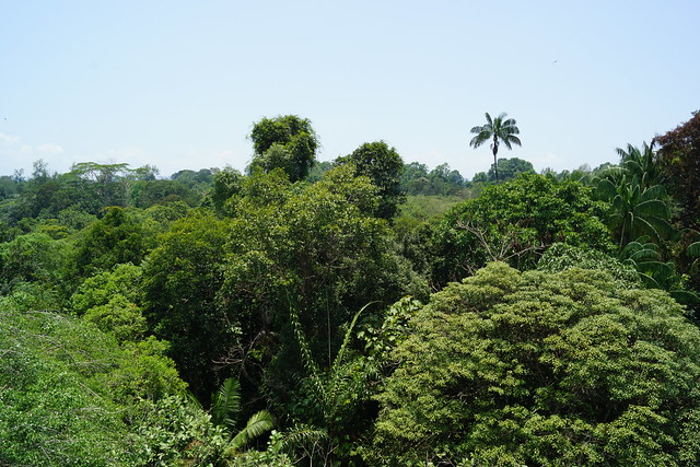 Singapore Rainforest Nature Park