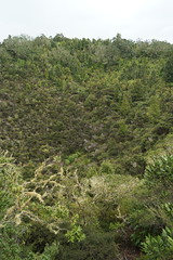Exploring Rangitoto