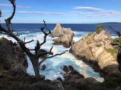 Point Lobos 5, Californa