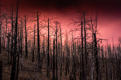 7 years after the Little Bear Fire
