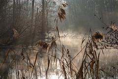 Promenade le long du Rhin par temps brumeux fin 2019