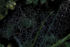 DSC_1316-1 geometric nature - close up photography