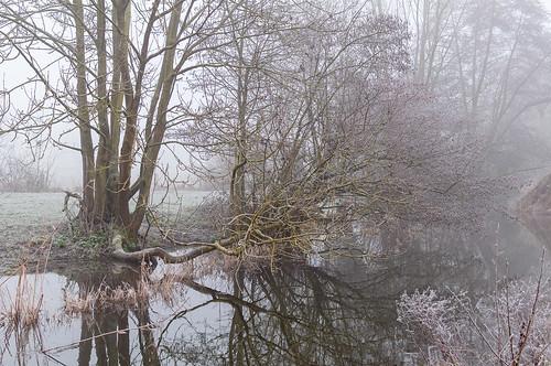 Hiver (Wolfisheim, France)-114