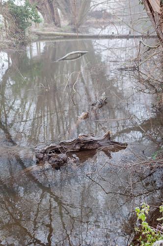 Hiver (Wolfisheim, France)-108