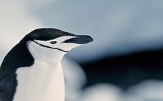 Antarctica Nov 2019