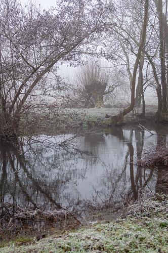 Hiver (Wolfisheim, France)-115