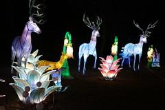 Chinese Light  Festival